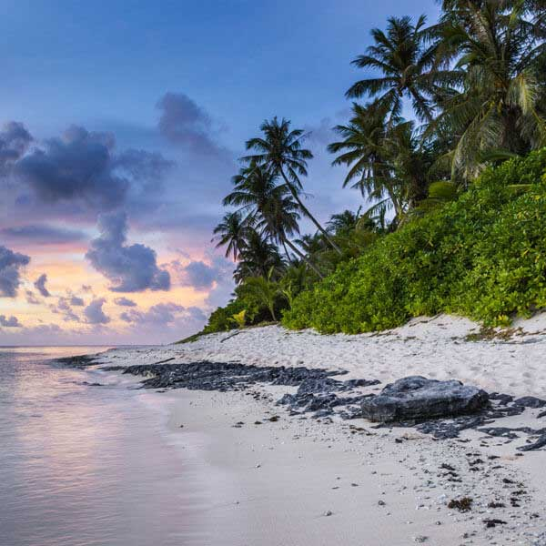 Adventure in Maldives: Swim with Whale Sharks & Manta Rays